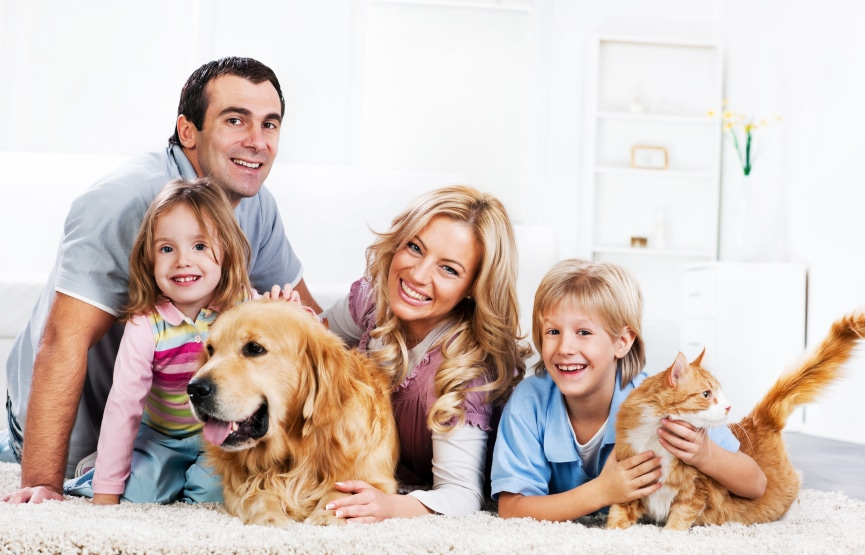 Pet Friendly House Cleaners