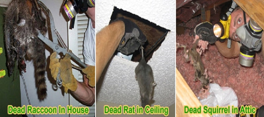 decomposition odours ottawa