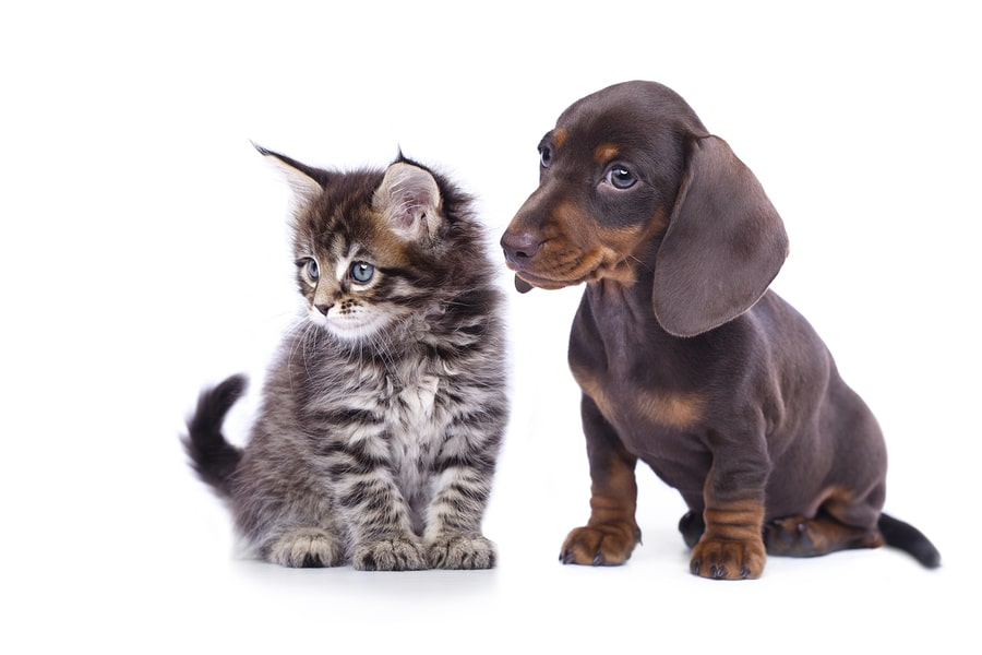 Pet Odour Removal ottawa