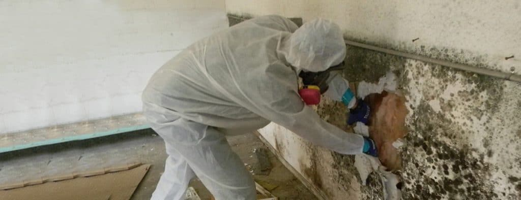 mold removal services ottawa